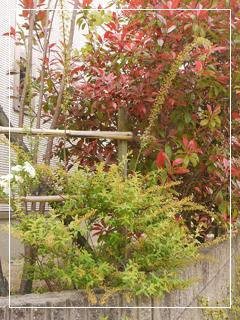 garden2015-40.jpg
