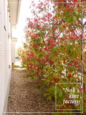 garden2015-46.jpg