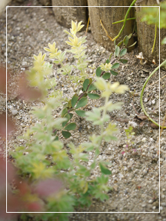garden2015-50.jpg