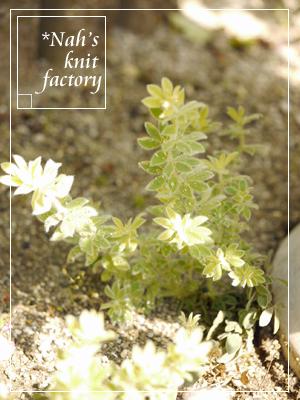 garden2015-51.jpg