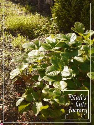 garden2015-52.jpg
