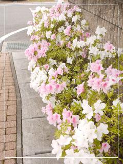 garden2015-61.jpg