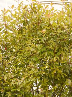 garden2015-64.jpg