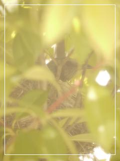 garden2015-66.jpg