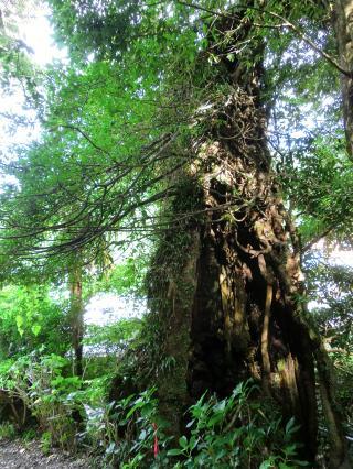 20150315_sei_tree_S.jpg