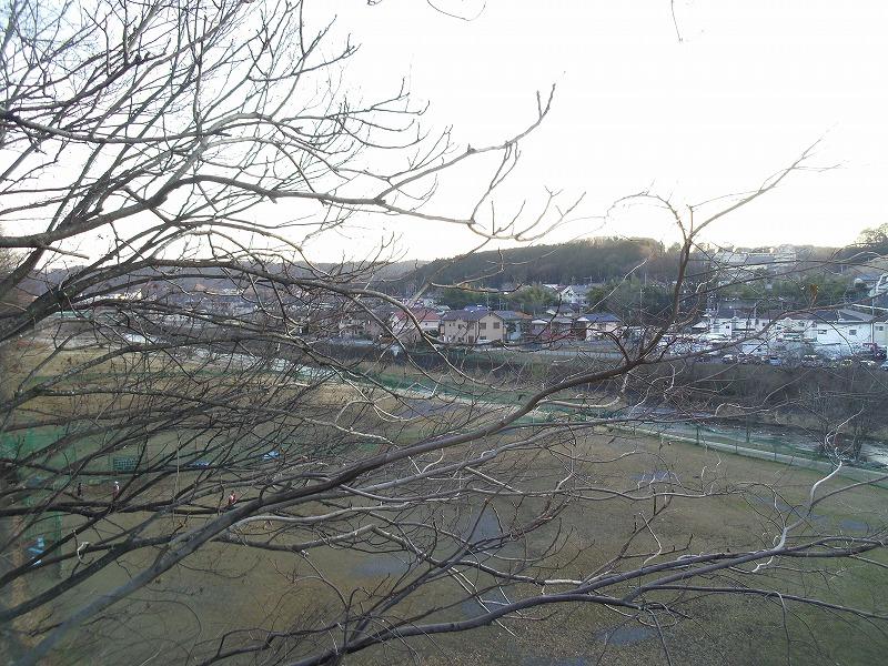 1月8日 飯能 河岸段丘 多分桜