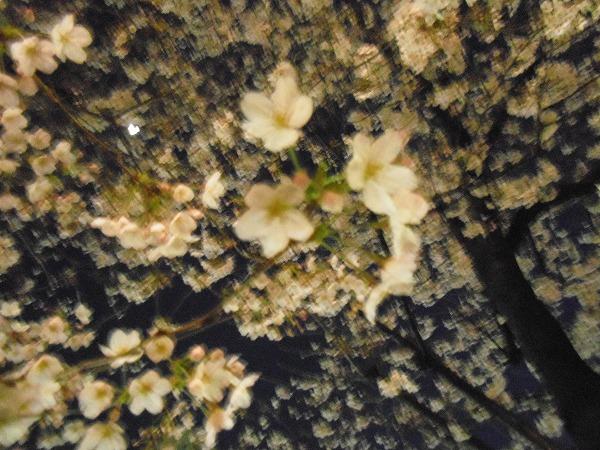 御茶ノ水 桜 3月27日