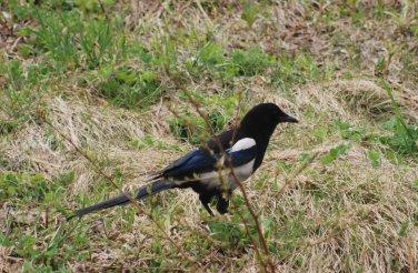 bird1-2_201501191602146b3.jpg