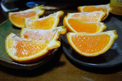 orange1-7.jpg