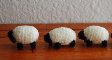 sheep1-6.jpg