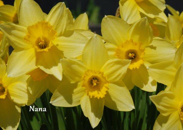 spring1-10.jpg