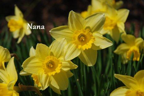 spring1-11.jpg