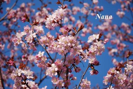 spring1-14.jpg