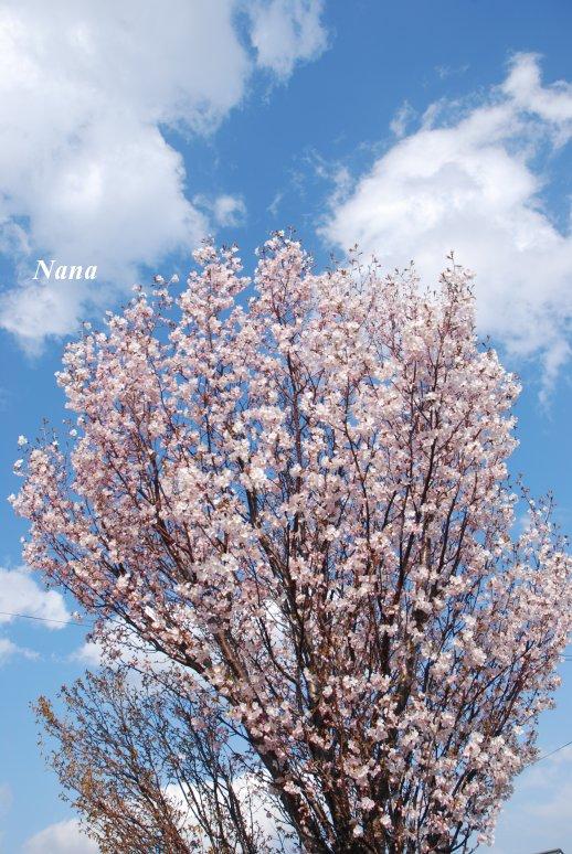spring1-15.jpg