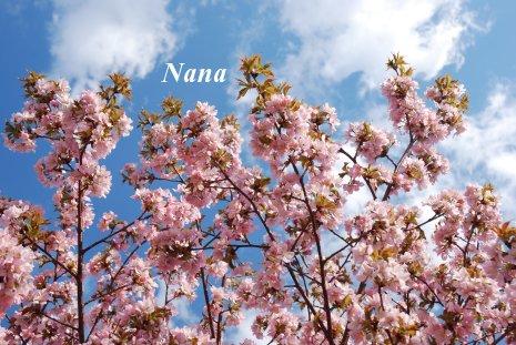 spring1-16.jpg