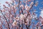 spring1-17.jpg