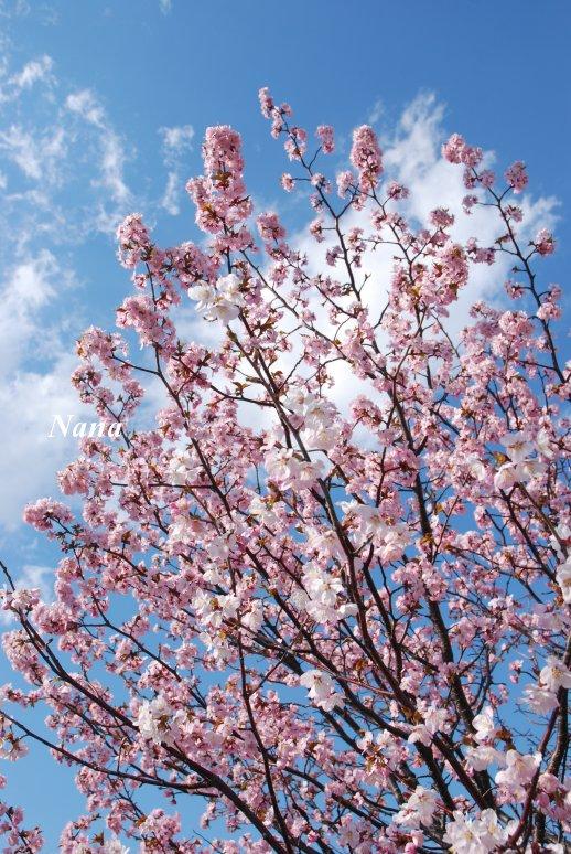 spring1-18.jpg