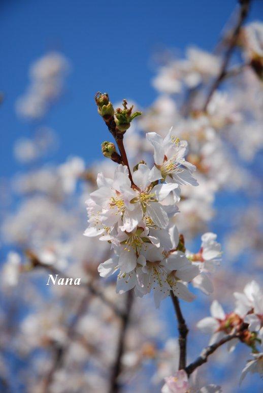 spring1-19.jpg