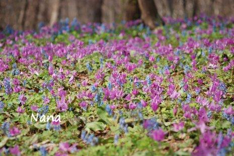 spring1-20.jpg