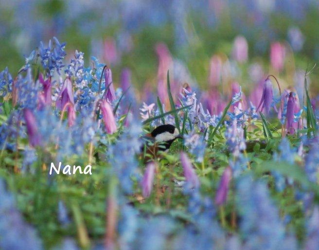 spring1-22.jpg