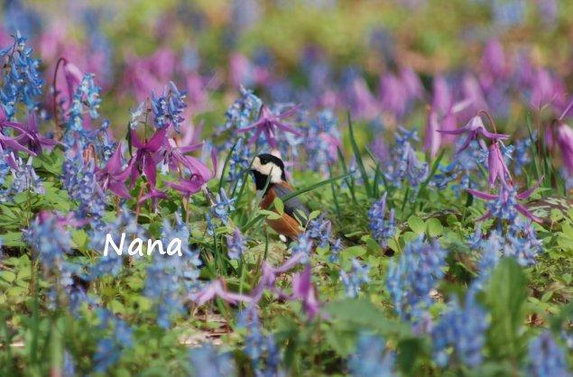 spring1-23.jpg