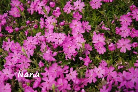 spring1-24.jpg