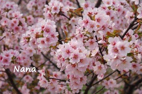 spring1-26.jpg