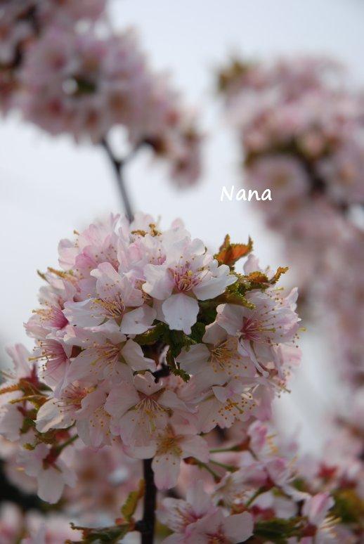 spring1-27.jpg