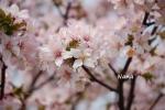 spring1-28.jpg
