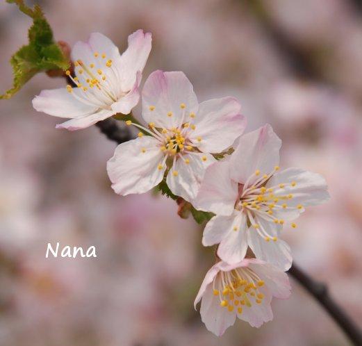spring1-29.jpg