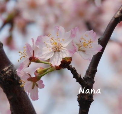 spring1-30.jpg