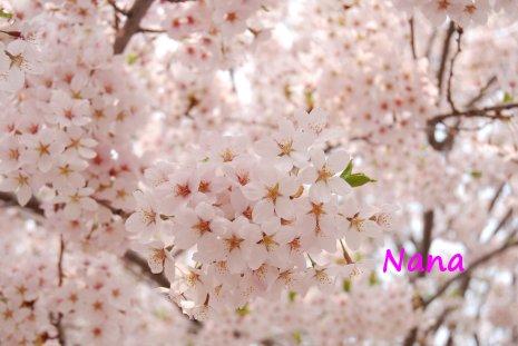 spring1-31.jpg