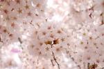 spring1-32.jpg