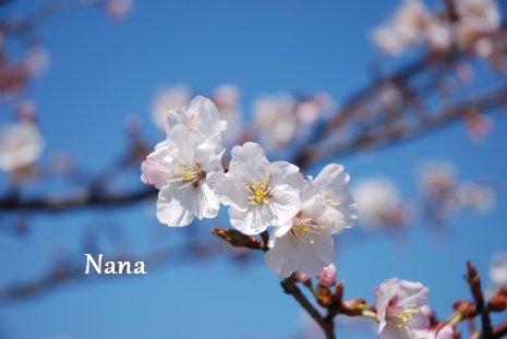 spring1-6.jpg