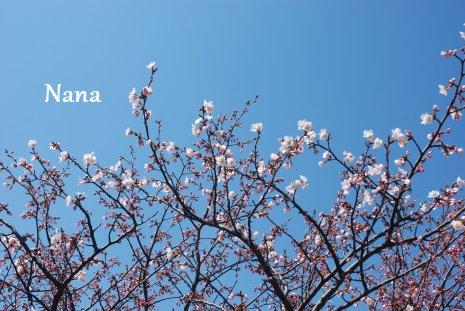 spring1-7.jpg