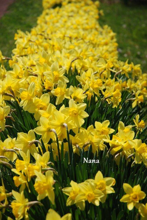 spring1-8.jpg