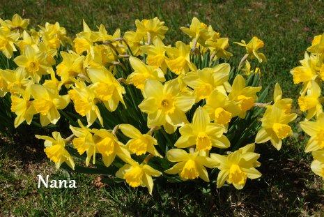 spring1-9.jpg