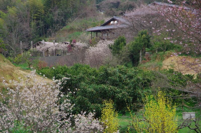 天理観光農園 春の花