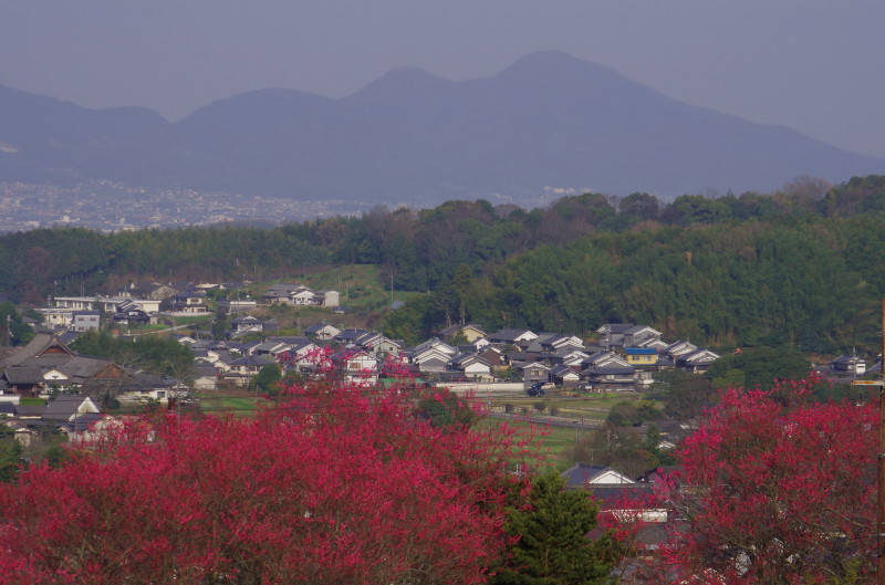 明日香 二上山と梅