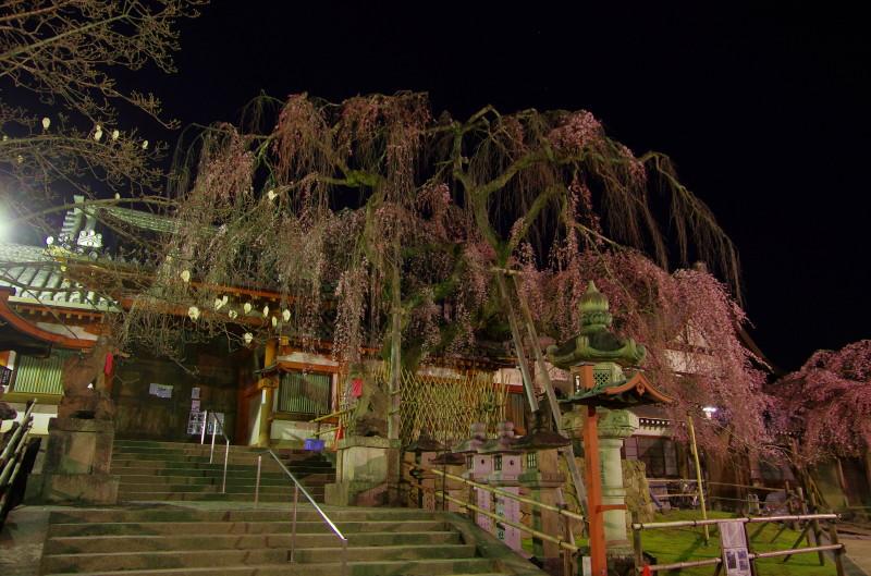 氷室神社 枝垂れ1