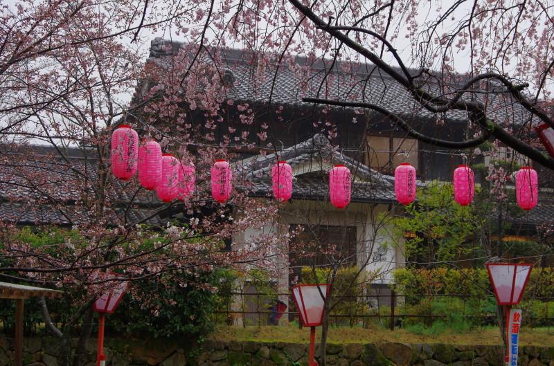 桜 石上神宮 レーブ