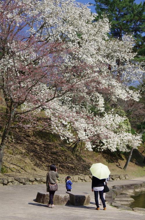奈良公園 浮見堂1