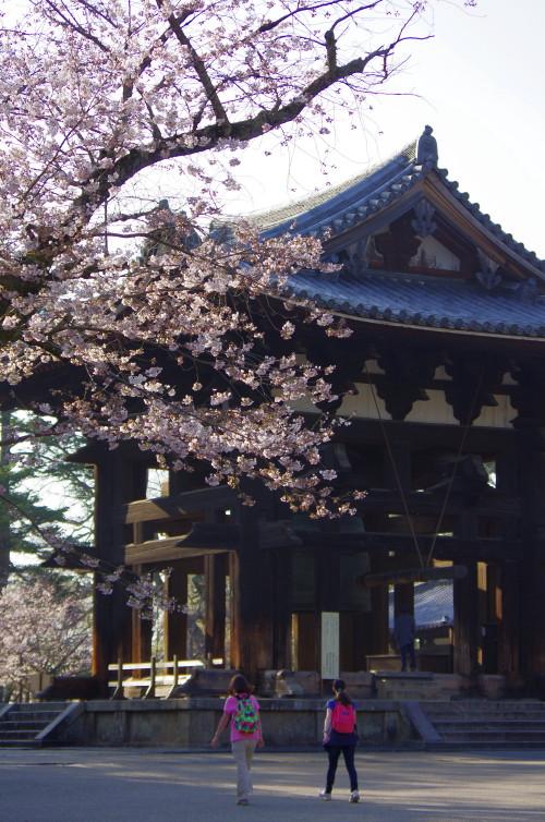 東大寺 桜