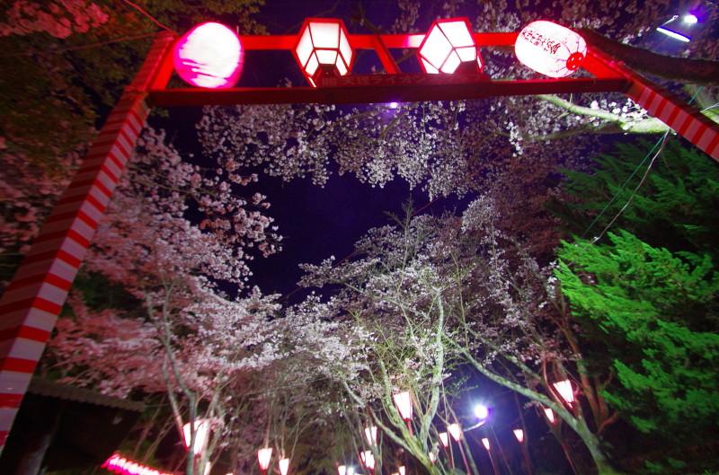 石上神宮 夜桜1