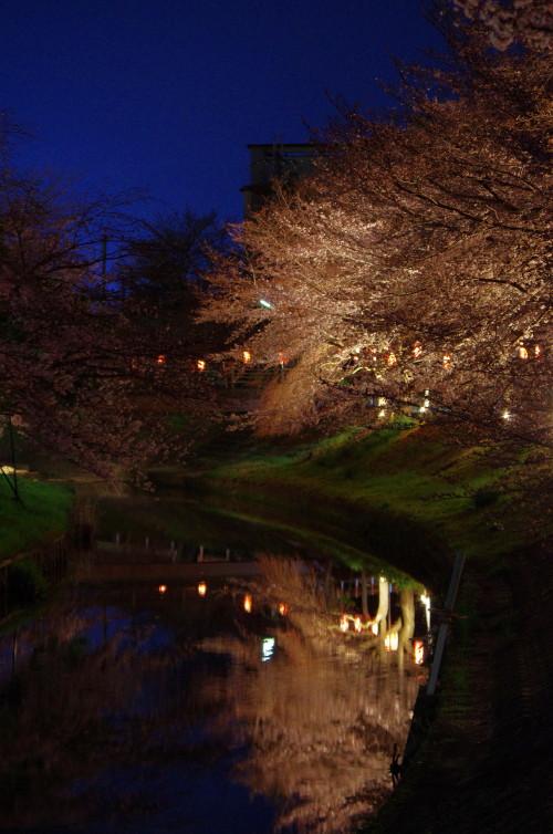 佐保川 夜桜1