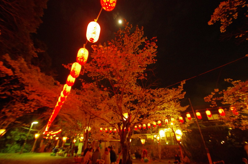 石上神宮 夜桜