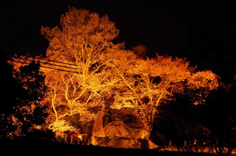 石舞台 夜桜1