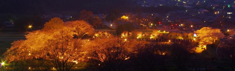 甘樫丘 桜ライトアップ