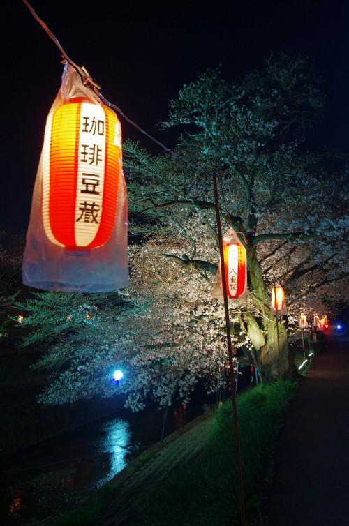 佐保川 夜桜