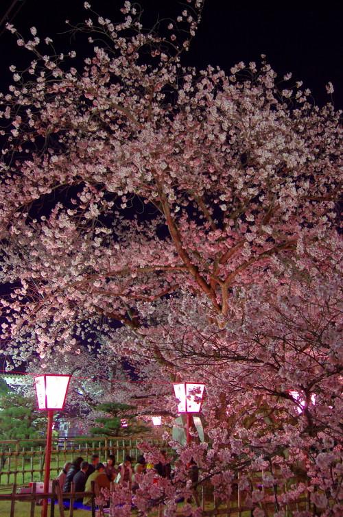 郡山 夜桜2